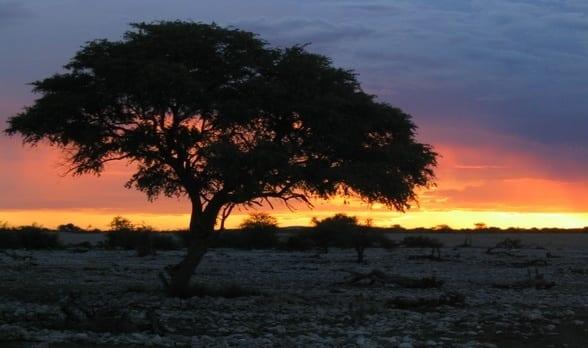 Daily Travel Photo: Sunset, Etosha National Park, Namibia