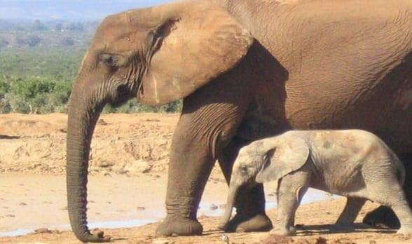 Daily Travel Photo: Elephants, Addo Elephant Park, South Africa
