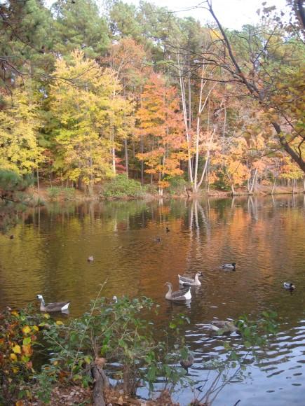 Lake Johnson Raleigh