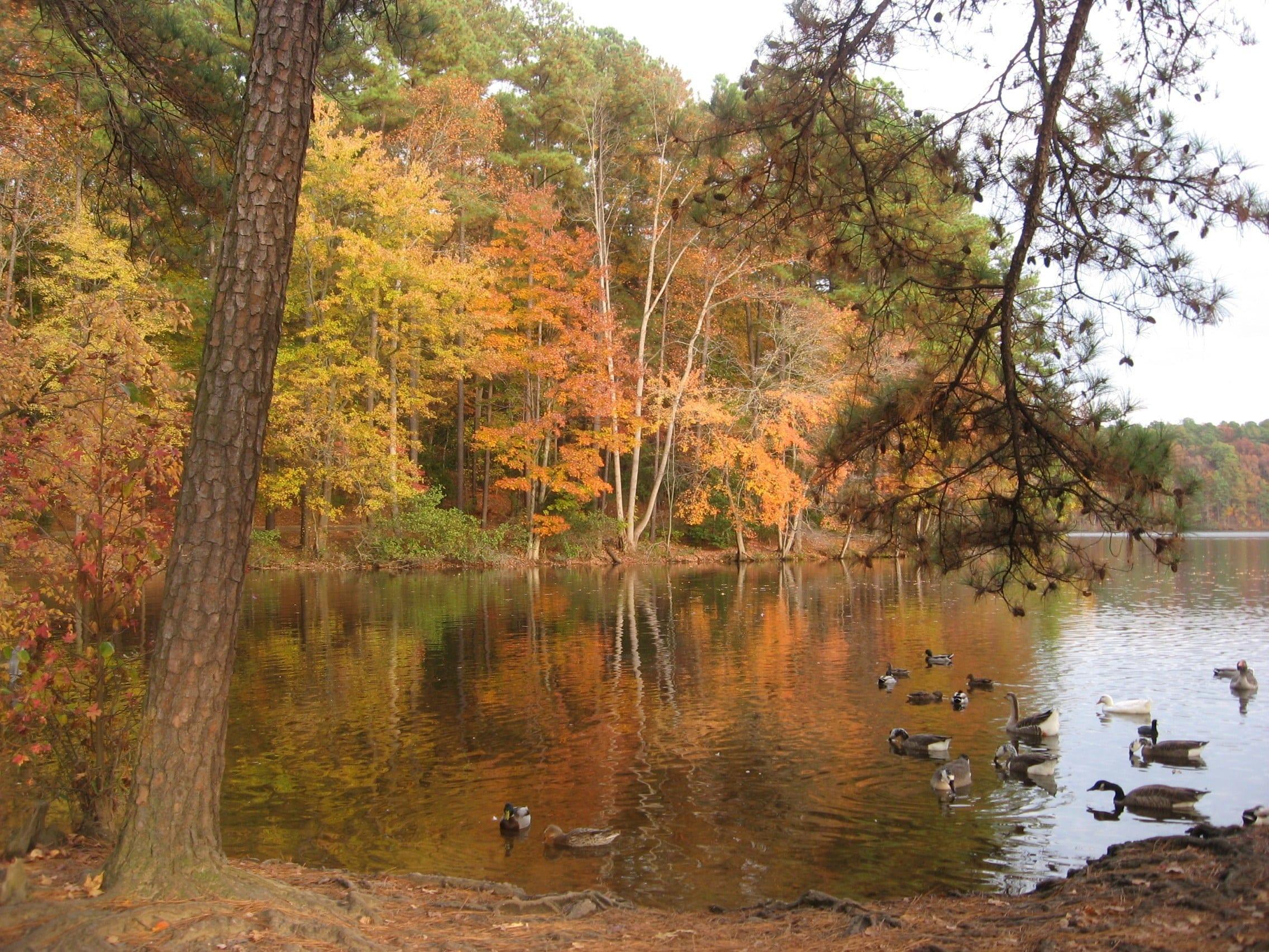 Lake Johnson, Raleigh, North Carolina