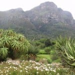Kirstenbosch Gardens Cape Town