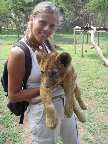 Lion cub - Big 5 in Africa