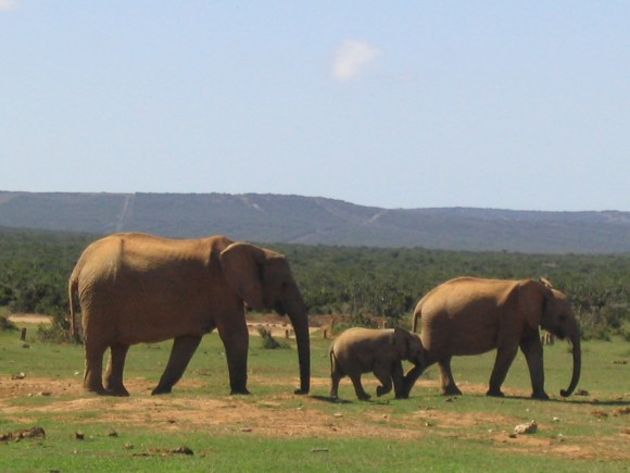 Addo Elephant Park, South Africa