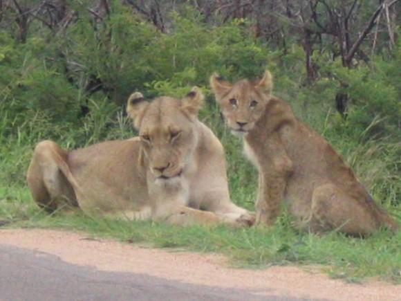 Big 5 in Africa