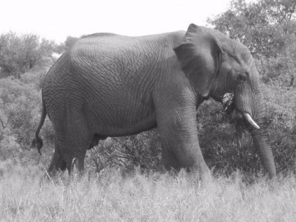 Etosha National Park Elephants
