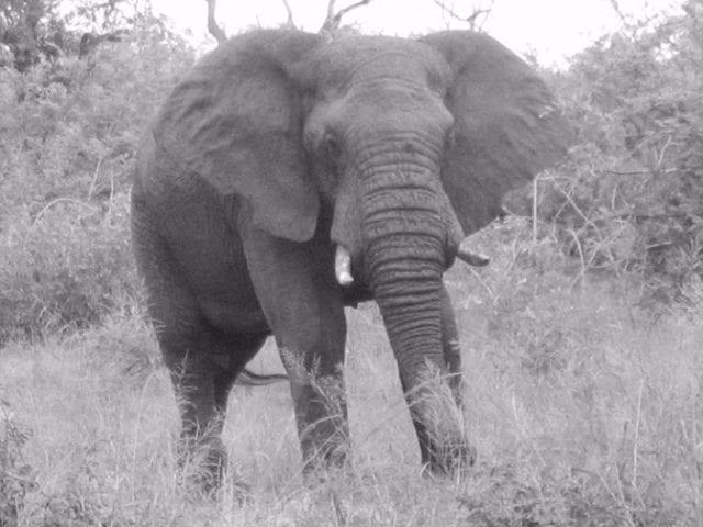 Why I love Elephants