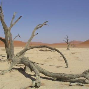 Travel Photo - Dead Vlei, Namibia, Africa