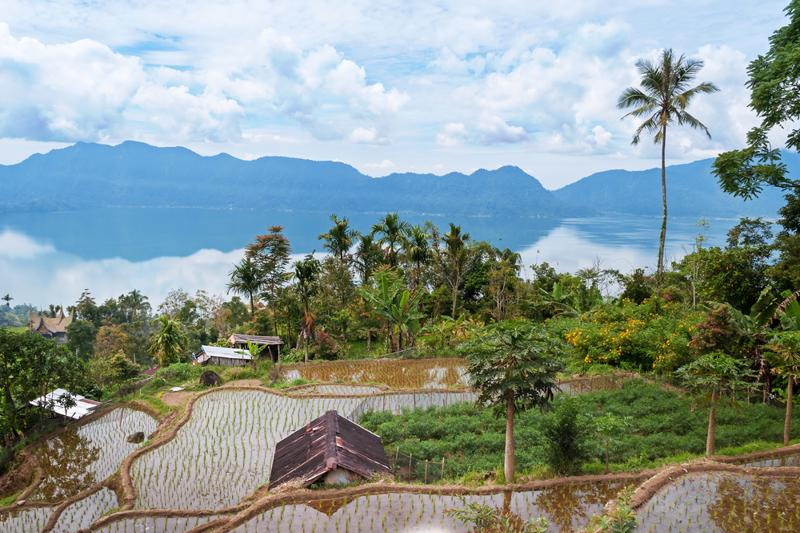 Terrace rice fields near Lake Maninjau. Lake Maninjau (Danau Maninjau) is a caldera lake in West Sumatra, Indonesia.