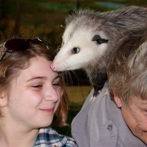 With possum