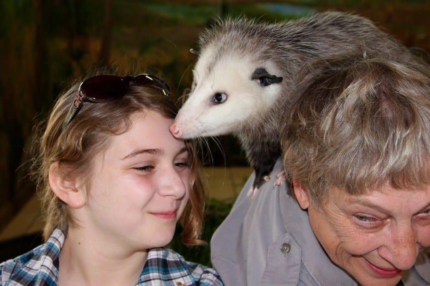 With possum