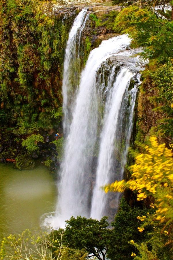 Whangarei Falls - 15 Things To Do On New Zealand's North Island