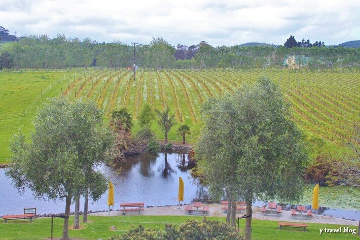 Westbrook winery Auckland New Zealand (2)