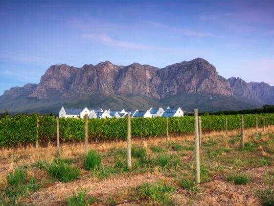 Stellenbosch wine region Cape Town South Africa