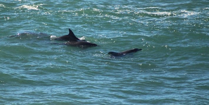 Port Macquarie dolphin watching