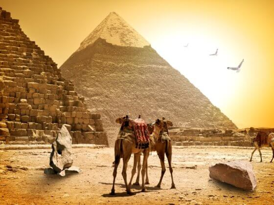 Cairo egypt camels and pyramids