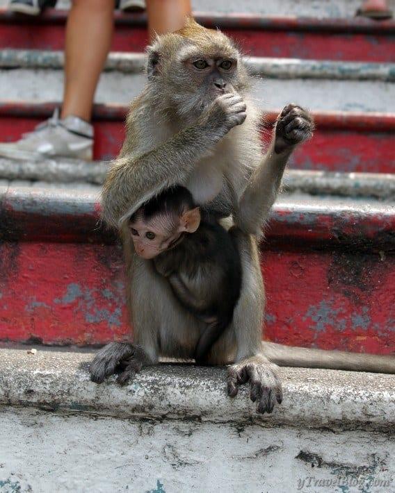 monkeys Batu Caves Malaysia