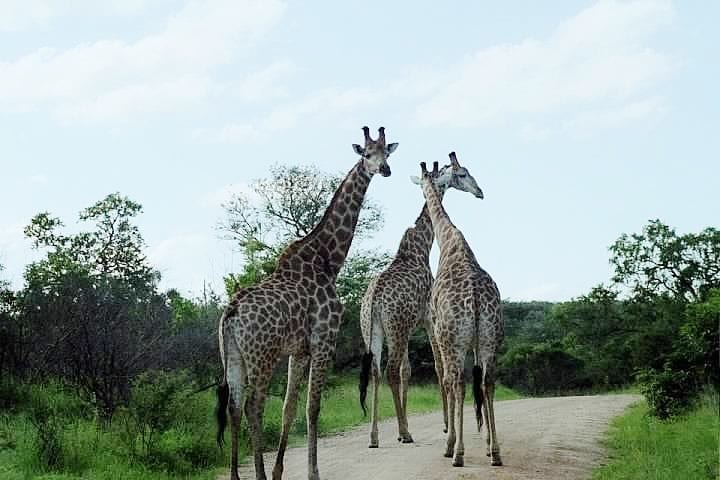 Kruger National Park South Africa – Photo Essay