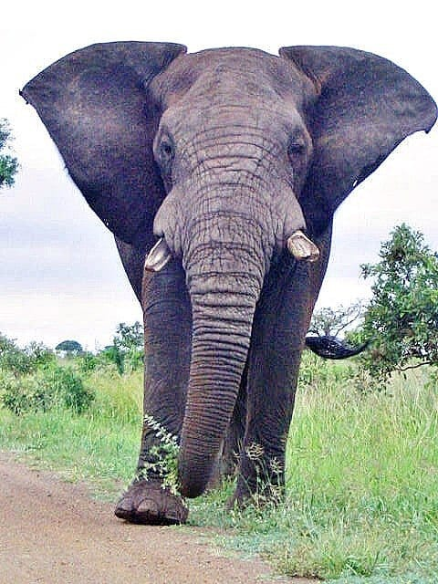 south african national parks essay Kruger national park is one of the largest game reserves in africa it covers an  area of 19,485  to the west and south of the kruger national park are the two  south african provinces of limpopo and mpumalanga in the north is zimbabwe, .