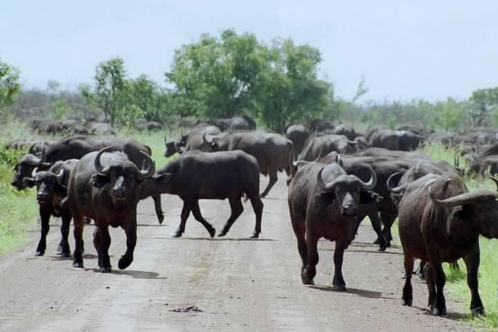 Kruger National Park South Africa