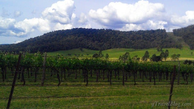 Bright wineries