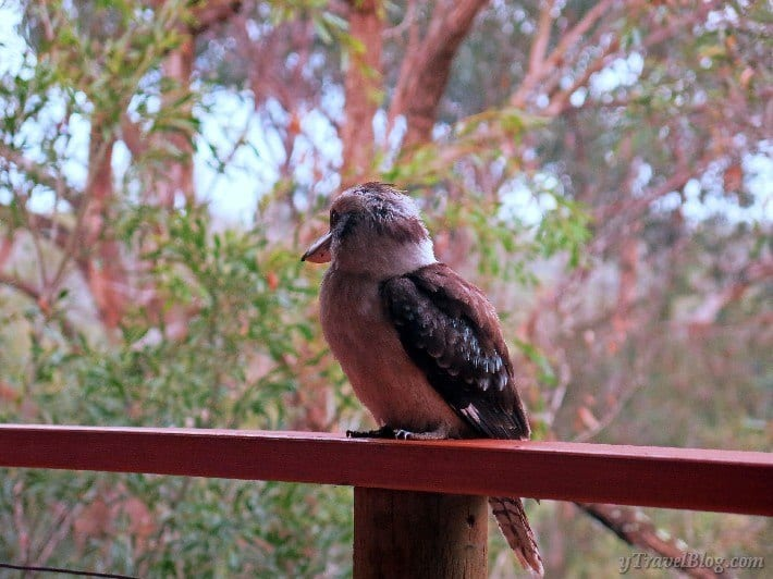 billabong retreat kookaburra