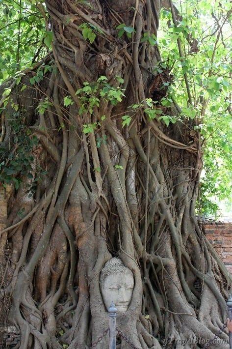 buddha head in banyan tree ayutthaya