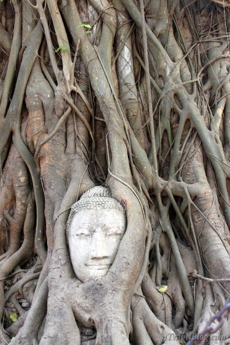 buddha head in banyan tree ayutthaya