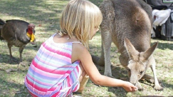 Kalyra-feeding-the-kangaroos1