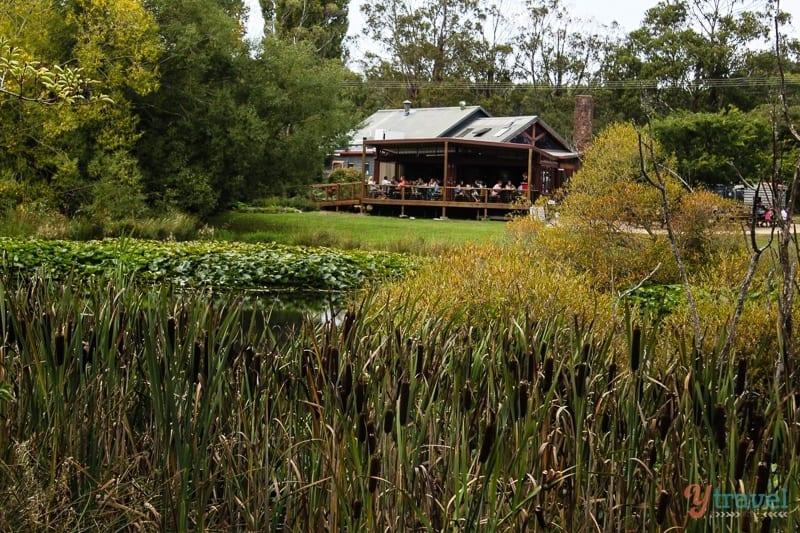 Raspberry Farm Launceston Tasmania