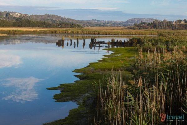 Tamar-Wetlands-Tamar-Valley