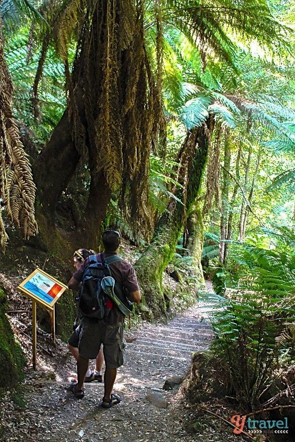 Liffey Falls walk, Tasmania, Australia
