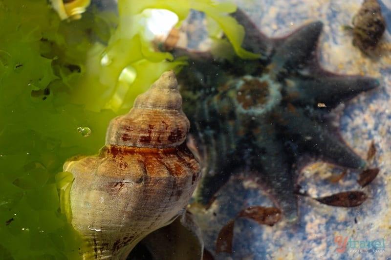 marine life starfish