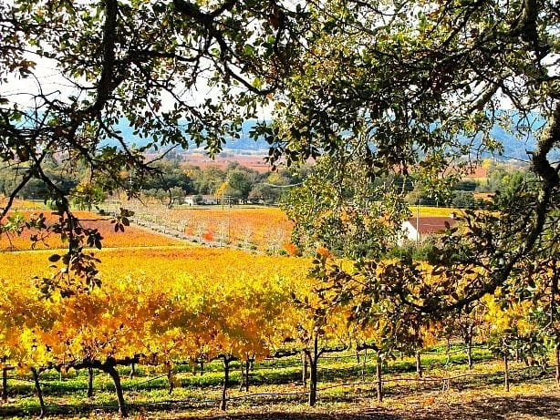 Visit Napa Valley - What to Do in San Francisco