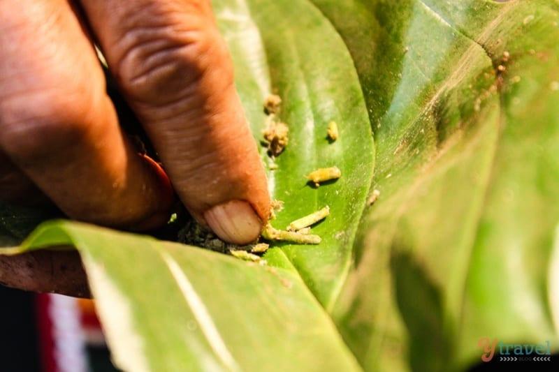natural healing Akha hill tribe (4)