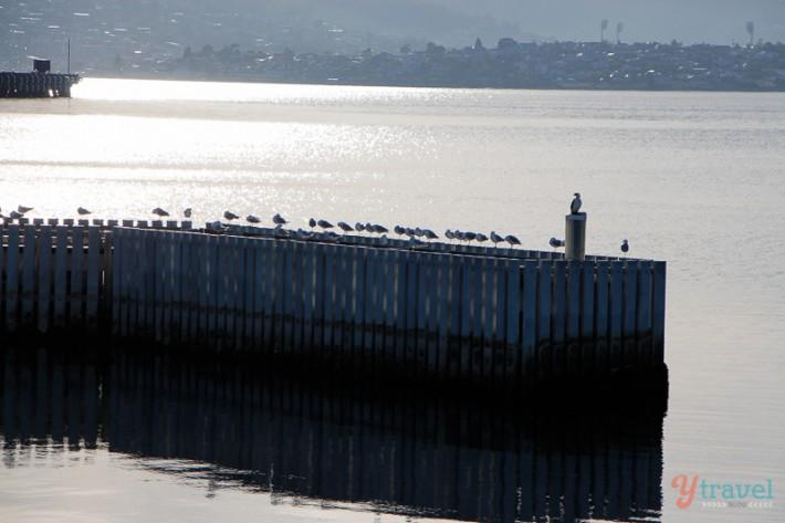 Hobart harbour (1)