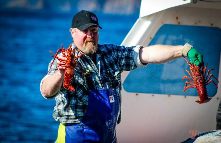 Catching lobster Tasmania