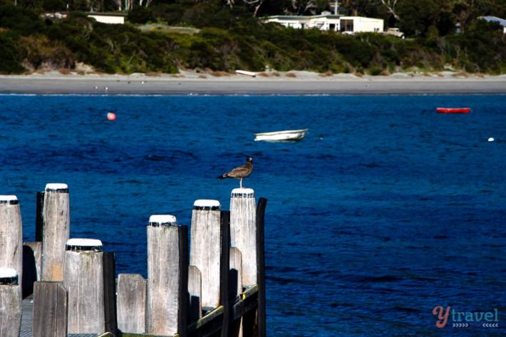 Rob pennicott tours Tasmania