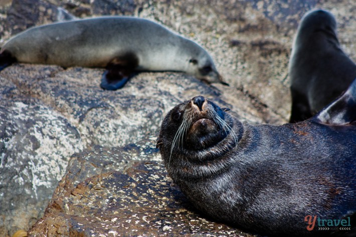 seals (11)