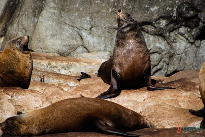seals (9)