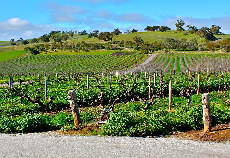Barossa Valley - Places to visit in Australia