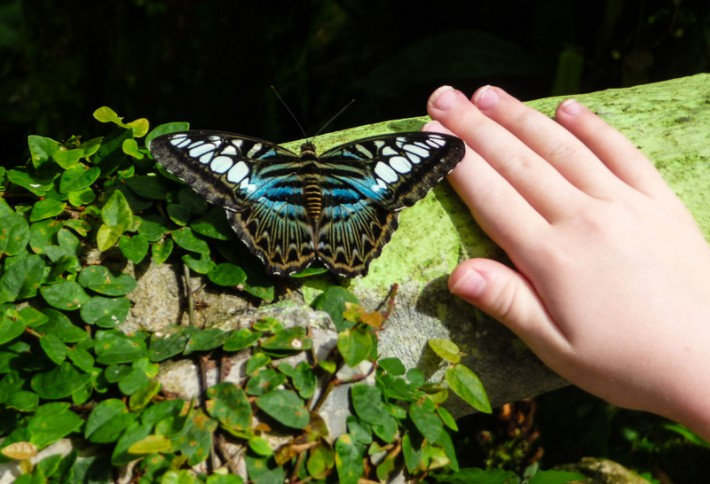 Butterfly Farm Penang Malaysia