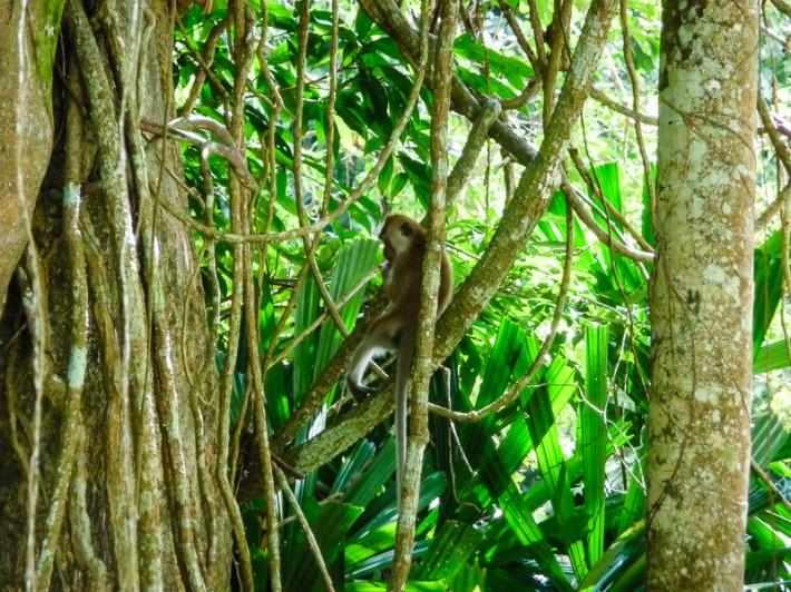 Monkey Spotting Penang Malaysia