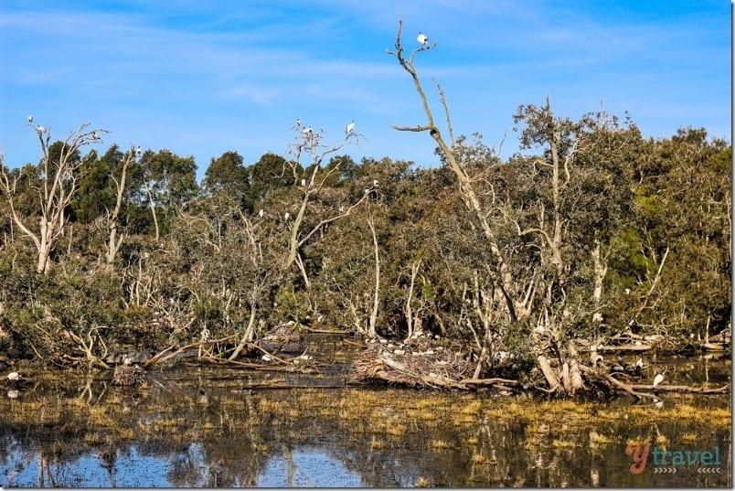 Hunter Wetlands Newcastle NSW Australia