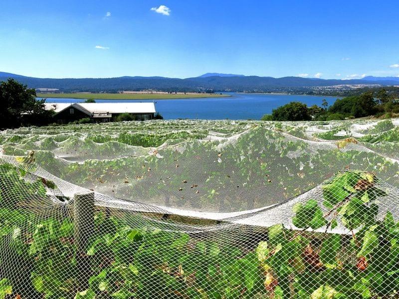Tamar Valeey, Tasmania, Australia