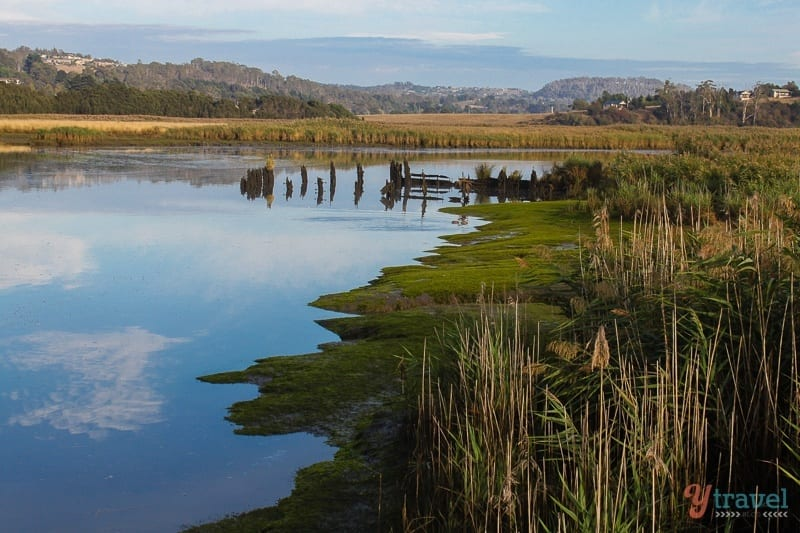Tamar Islands Wetlands, Tasmania, Australia