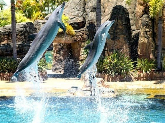 Sea World, Gold Coast, Australia