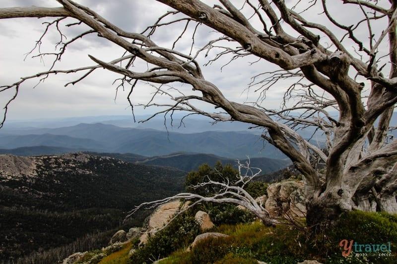 Mt Buffalo, Victoria, Australia