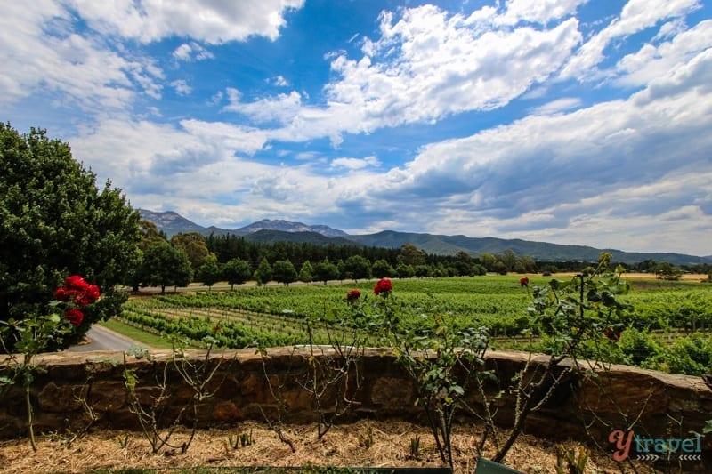 Feathertop Winery Bright (11)