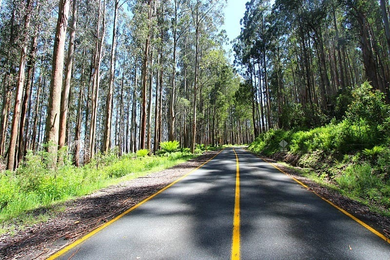 things to do in Marysville Victoria