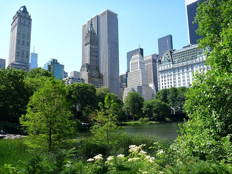 Central Park New York City in the summer